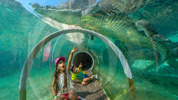 A see through tunnel puts the whole family beneath the alligators at Zoo Miami.