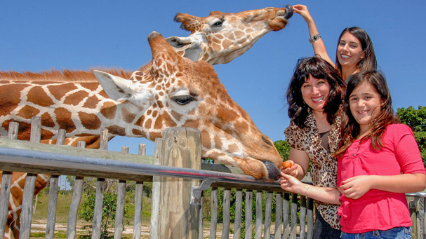 Feed the giraffes is an amazing experience for the whole family at Zoo Miami.